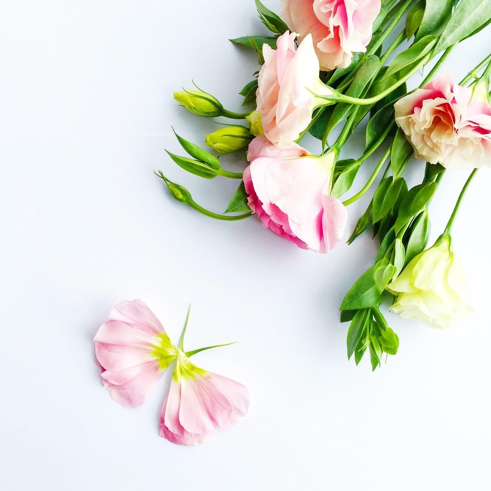 honeyandvelvet_flower_butterfly