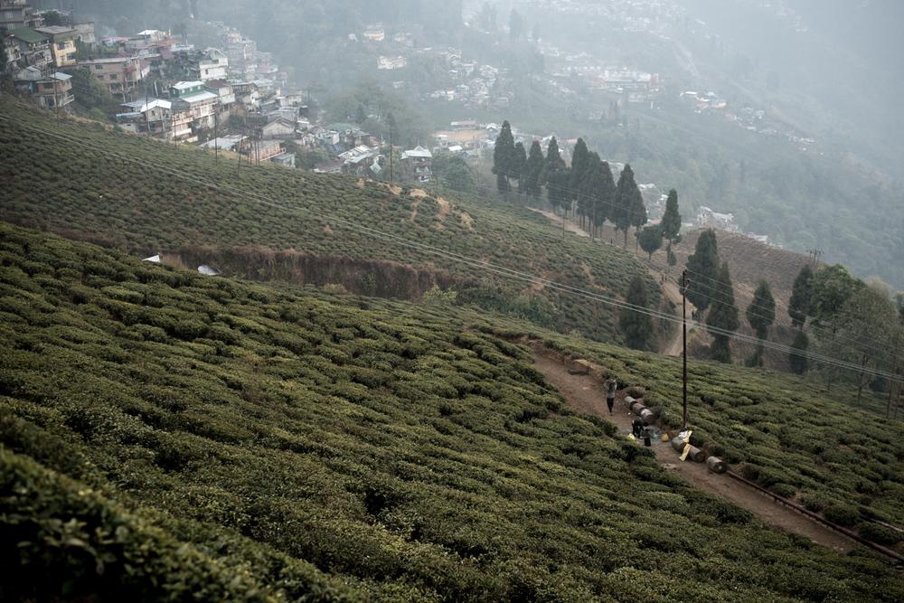 darjeeling_06_7739.jpg