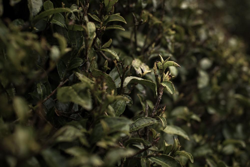darjeeling_07_7709.jpg