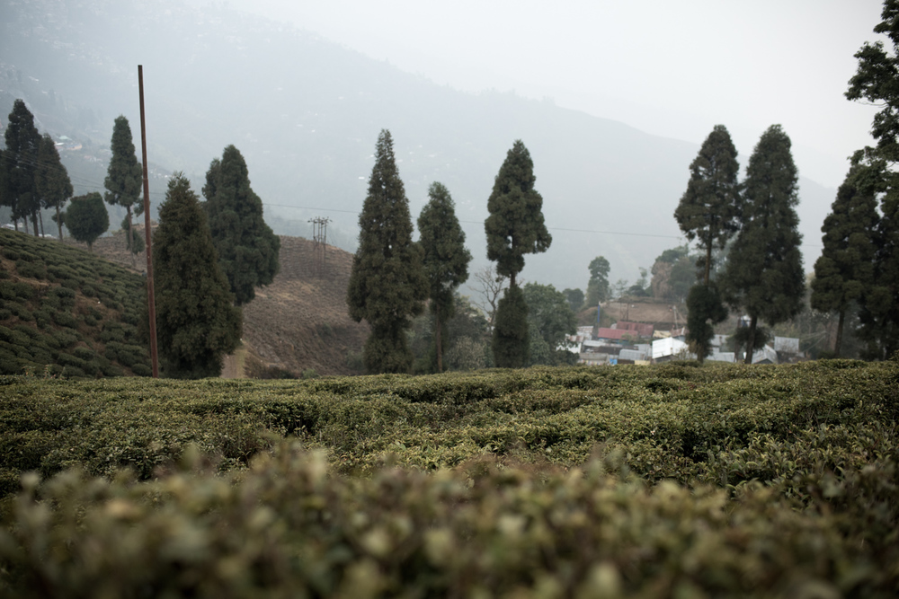 darjeeling_11_7733.jpg