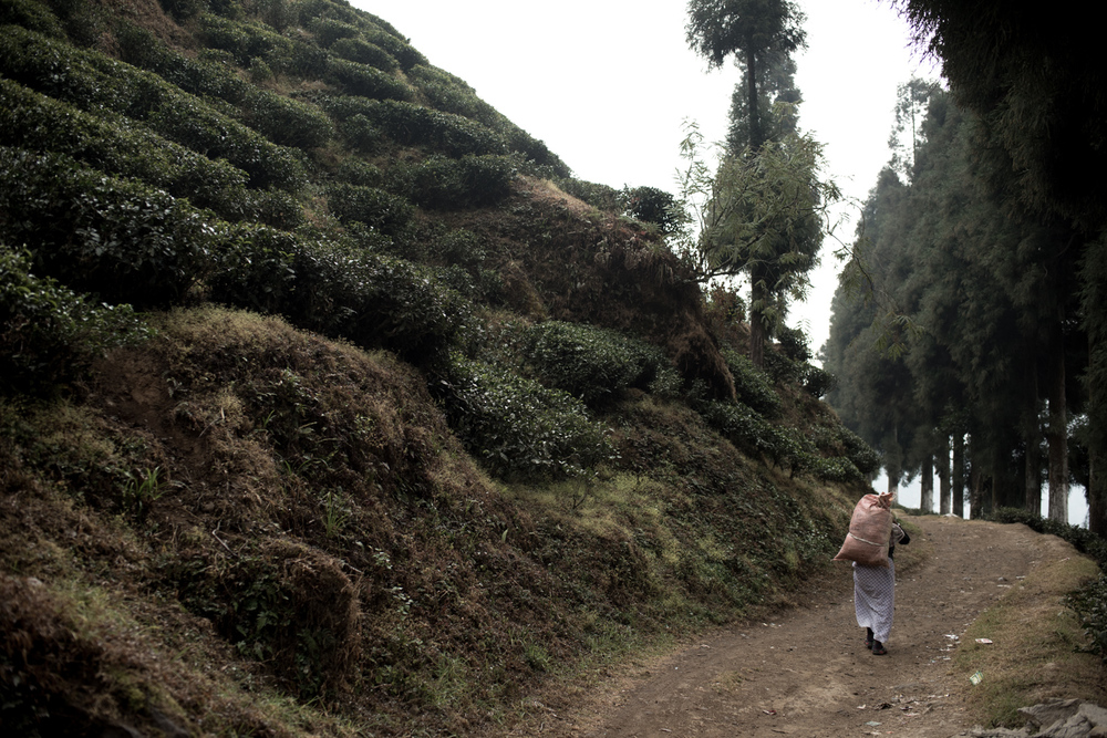 darjeeling_13_7694.jpg