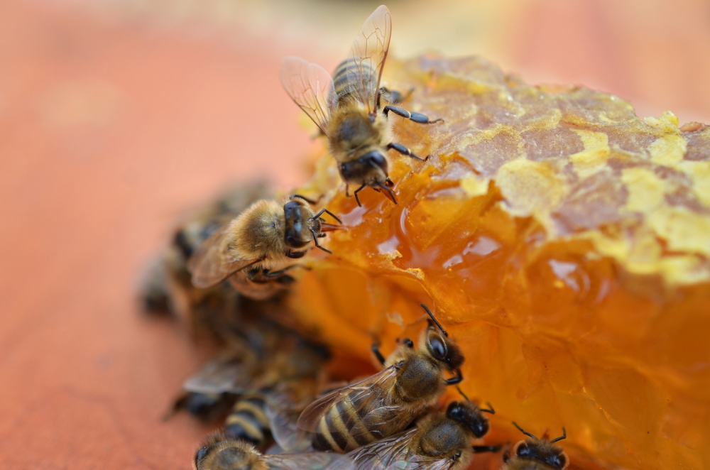 honey-1.jpg