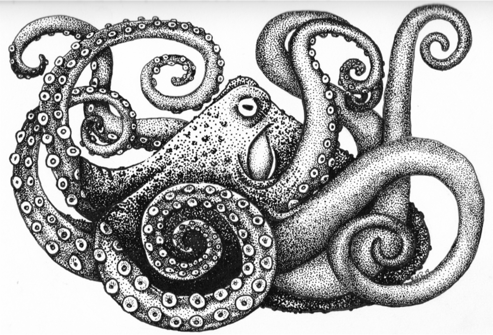 O is for Octopus, Illustration © 2019 Rolling Rook Studio All Rights Reserved. Rolling Rook Studio LLC