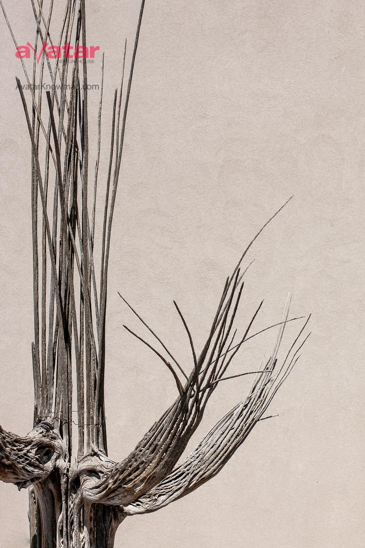 "Week 10 winner of ""Cactus Form"" - Helene from Lino Lakes, MN!"