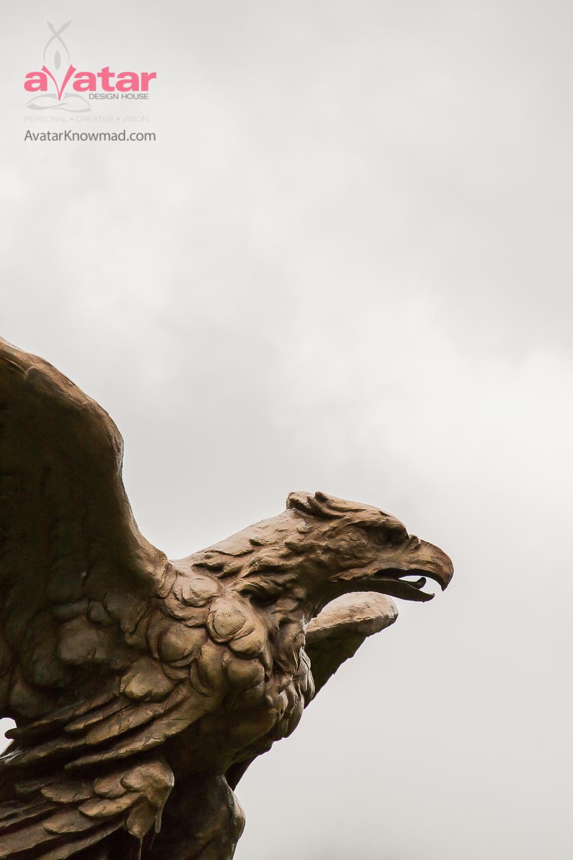 "Week 12 winner of ""Eagle's Profile"" - Stephanie of Michigan!@slschlegel13"