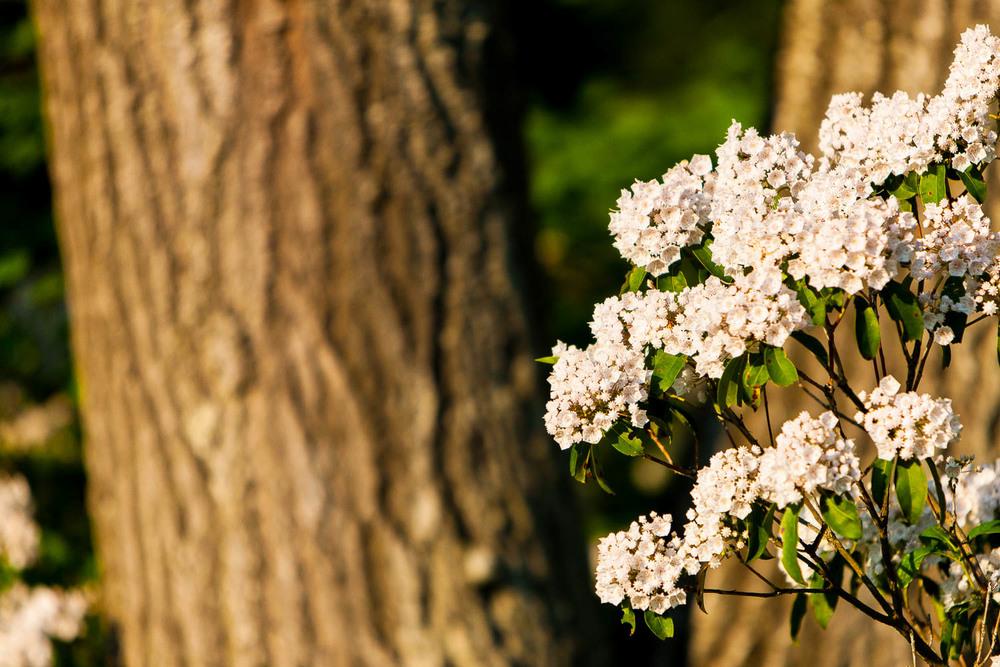 """Week 44 winner of """"Flowering Azalea"""" - Dawn from DE!"""