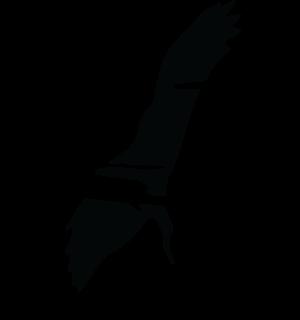BIRD ONLY LOGO TRANSPARENT copy.png
