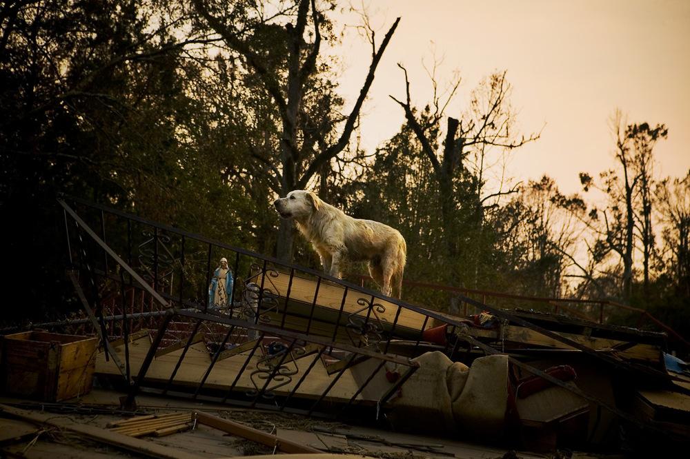 Feral dog on rubble of Catholic church, Pearlington, Mississippi