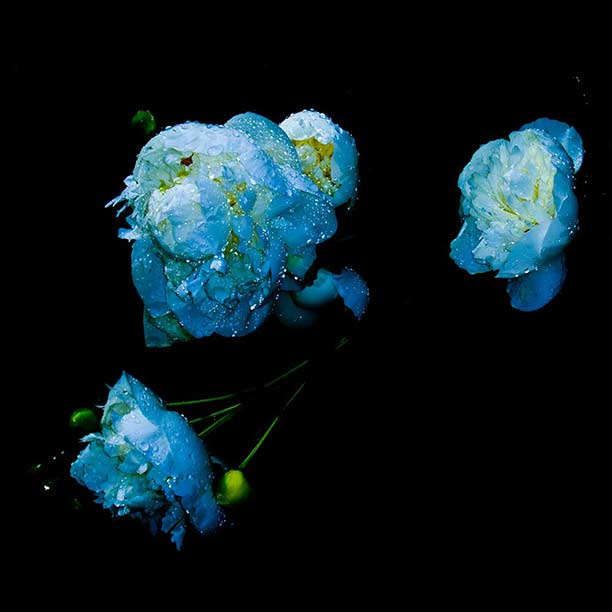 clayton-cubitt-flowers01.jpg