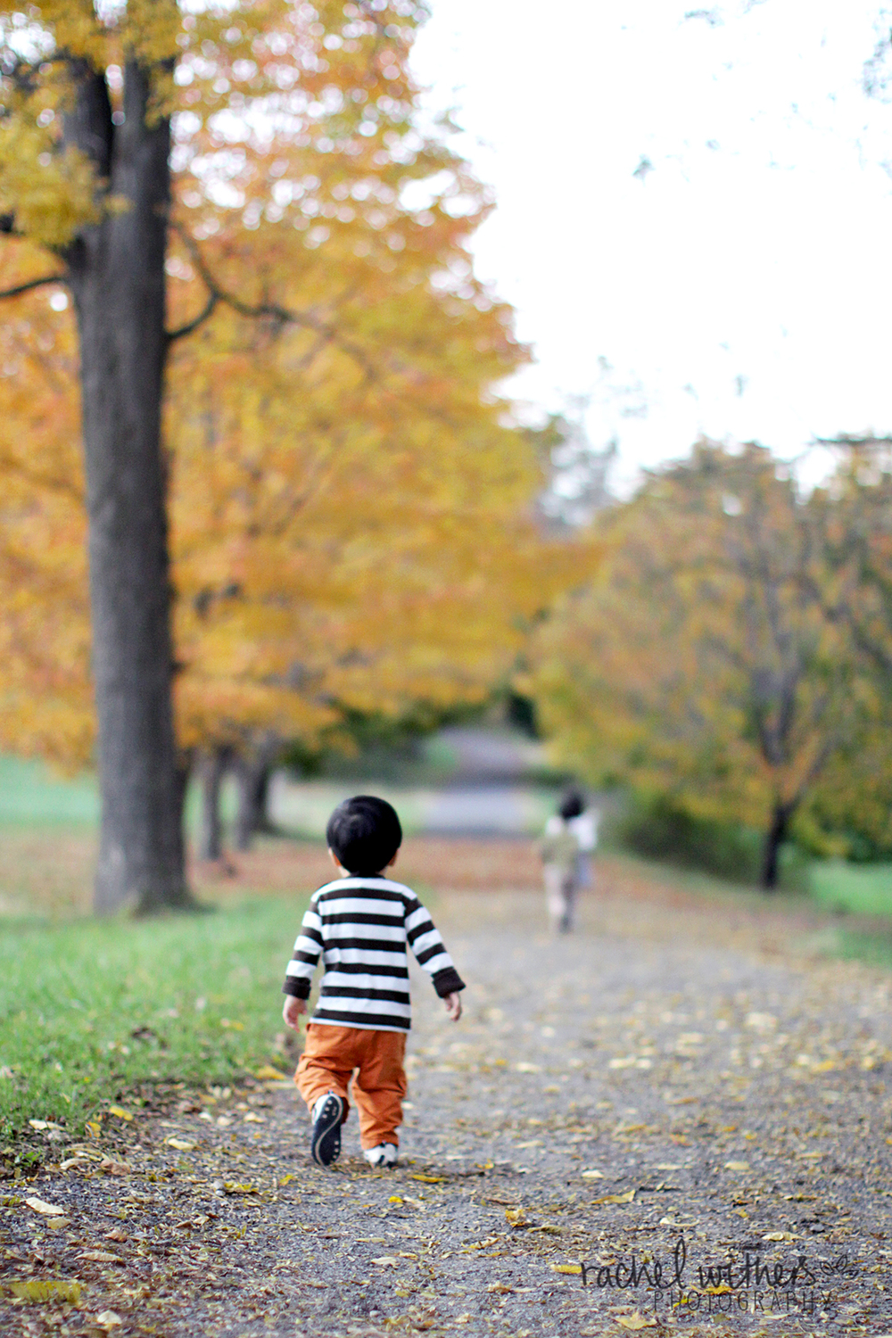 Fall family photos in Tarrytown, Sleepy Hollow, Rockefeller State Park, Westchester County