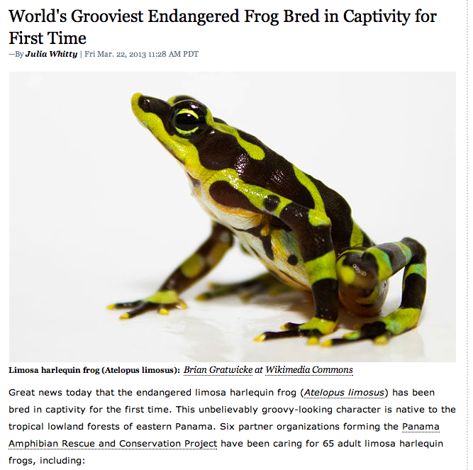 World's grooviest frog.png