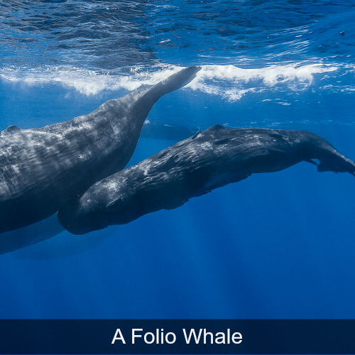 A Folio Whale.png