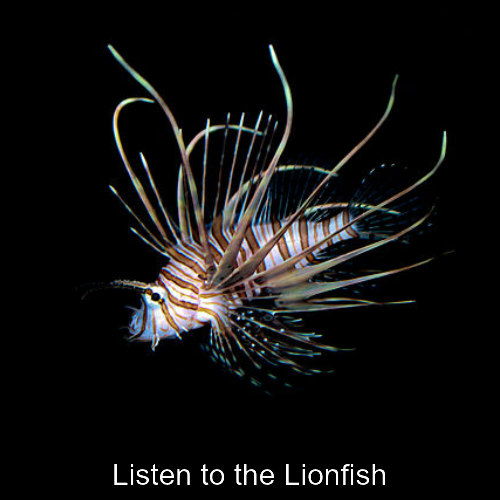 Listen to the Lionfish st.png