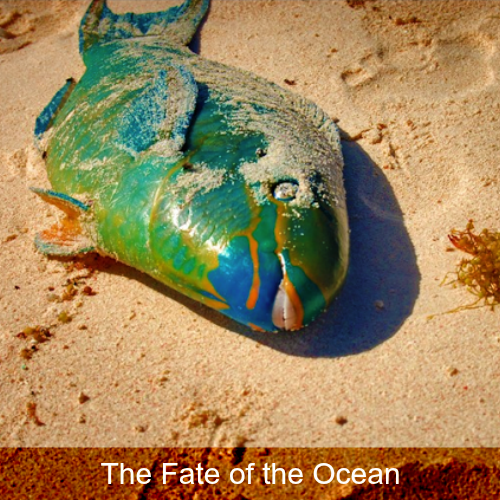 The Fate of the Ocean st.png