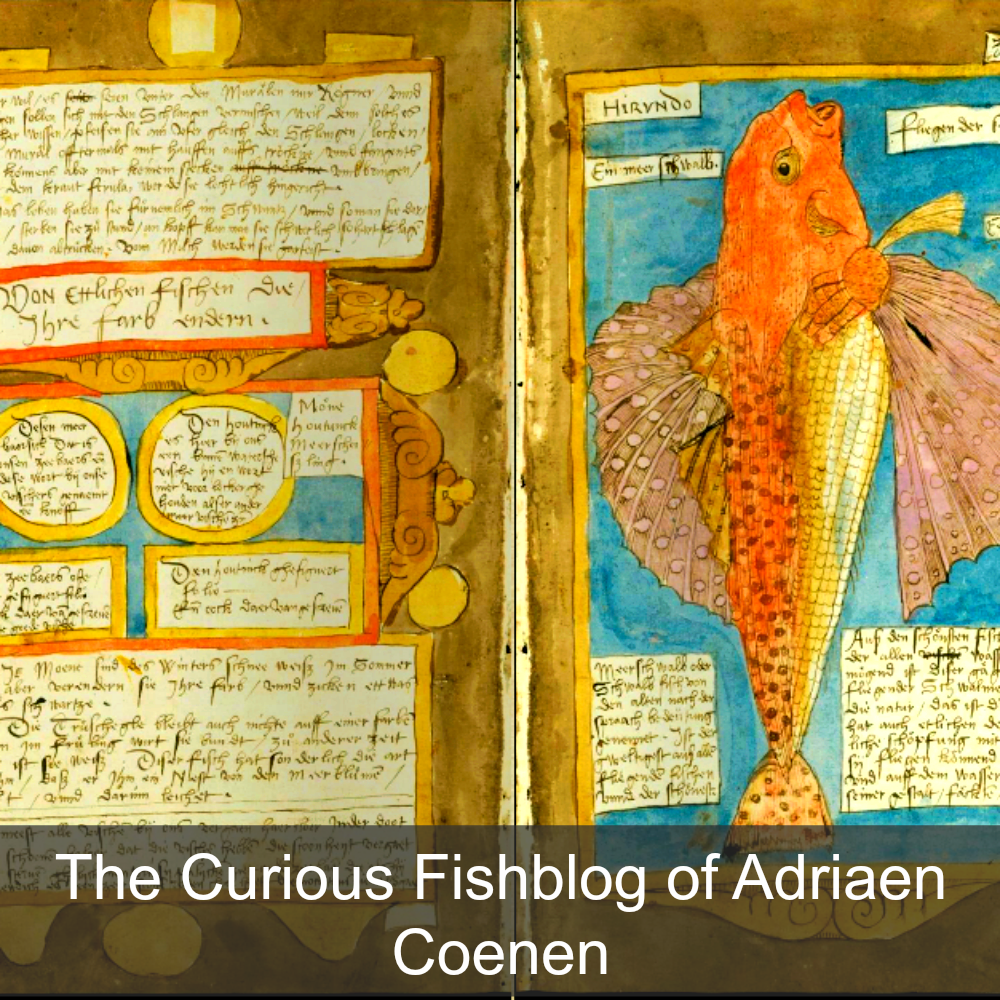 The curious fishblog of Adriaen Coenen.png