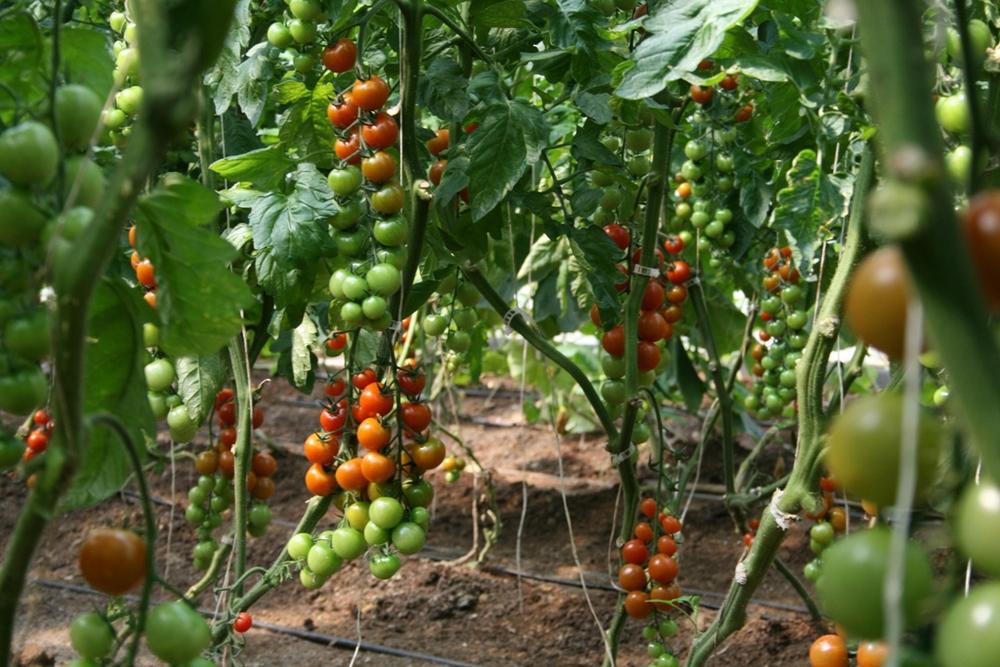 web Organic growing.jpg