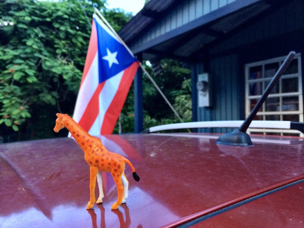 pumpkin-puerto-rico-flag.JPG