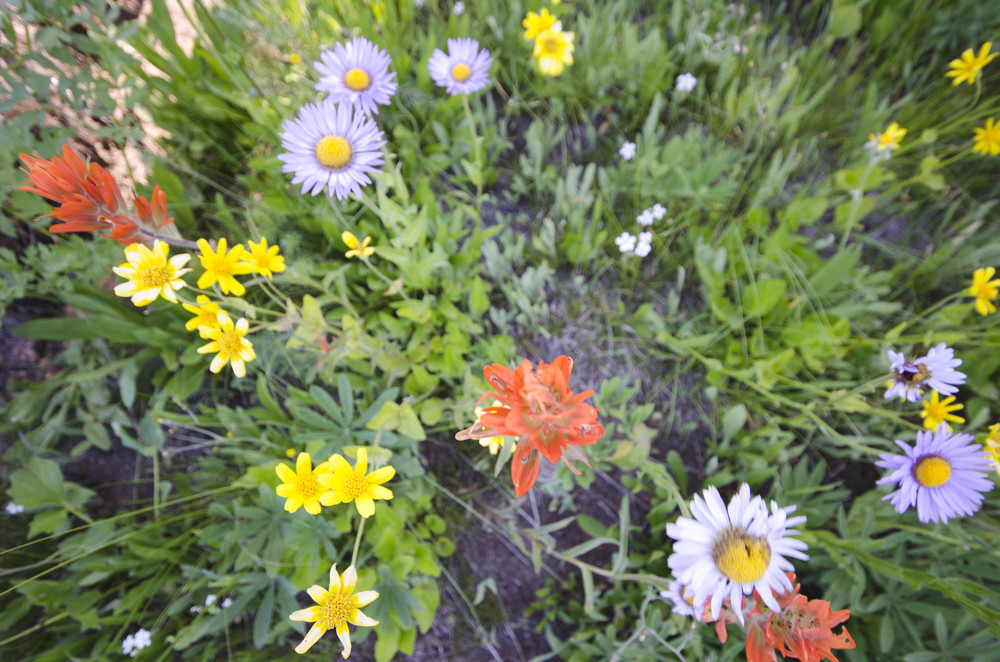 Day 31: 14 miles for vistas and flowers