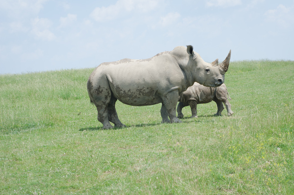 Rhinos, Persian Onagers and Sichuan Takins - oh my!