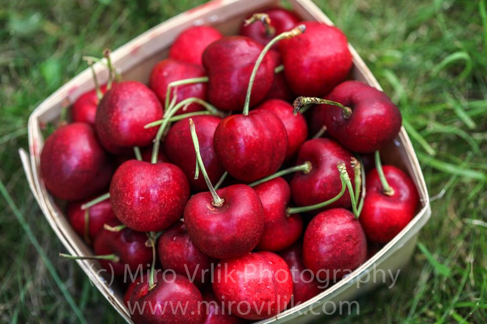 Cherry   July 14 2013