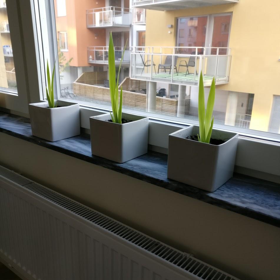 Kolla växter som lever!