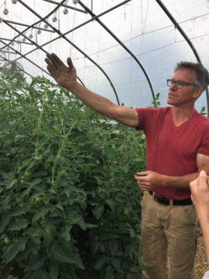 Jim Schultz showing his tomato trellis growing system.  Photo by Emma Bailey Ryan