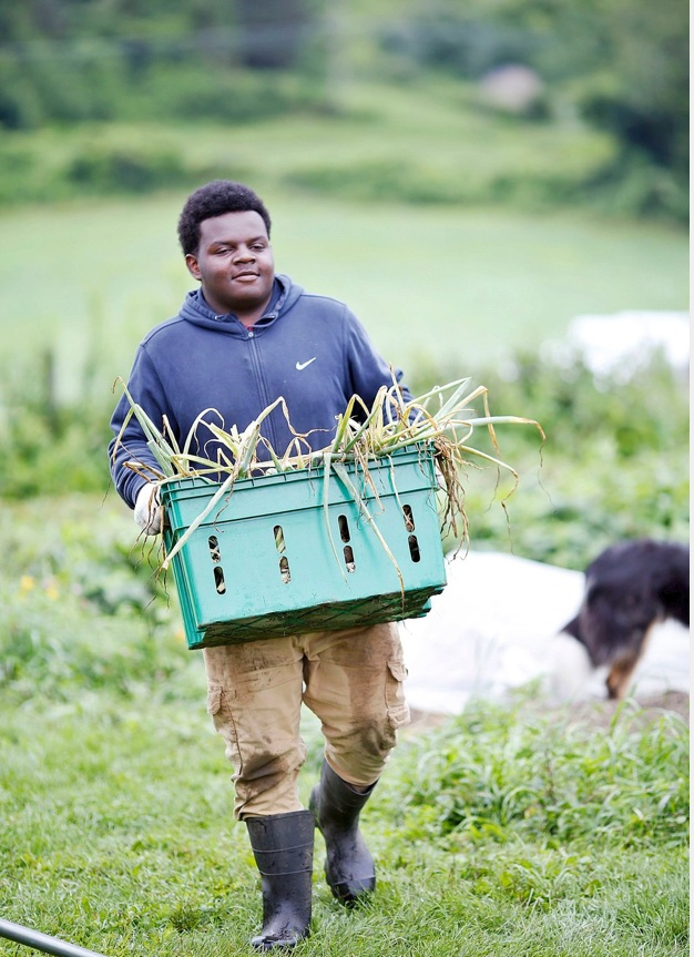 Davon Young, 15, has been harvesting and sorting vegetables at Red Shirt Farm in Lanesborough this summer through his involvement with the Pittsfield Youth Works program. Davon is among 71 youngsters who managed to find gainful employment this summer through three programs administered by the Berkshire County Regional Employment Board.  Photo by Stephanie Zollshan - The Berkshire Eagle