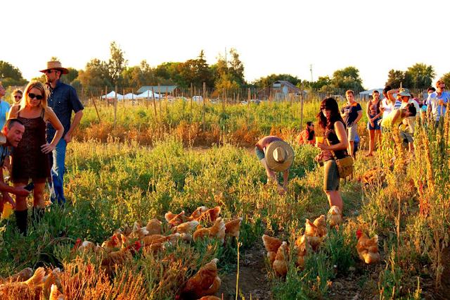 farm party hens.jpg