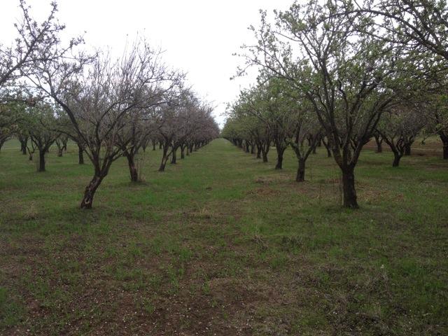 86 orchard.jpg