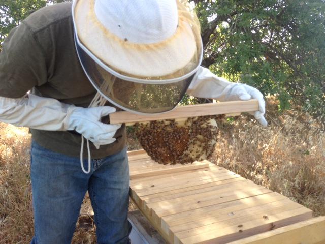 Top Bar Hives.