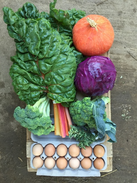 See our csa box gallery