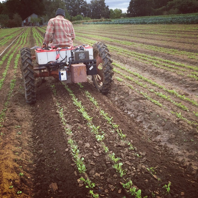 Once they're up, use our electric tractor to cultivate in-between rows (Beets shown here).