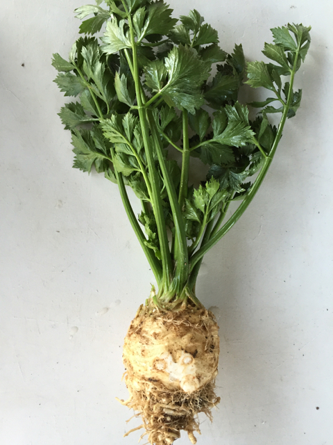 Celeriac or Celery Root.  Use the tops and the roots - double wham!