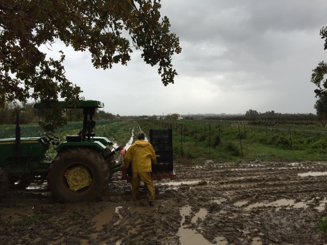 We're loving the rain! Even though it does slow us down quite a bit. Even getting crops out of the field is a challenge.