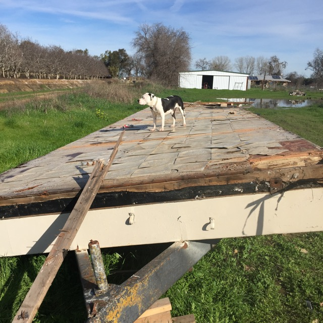 Clover supervising the trailer demolition.