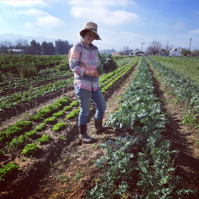 Maggie harvesting Red Russian Kale.