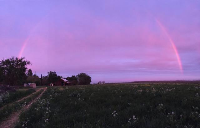 A rainbow over our farm at sunset.