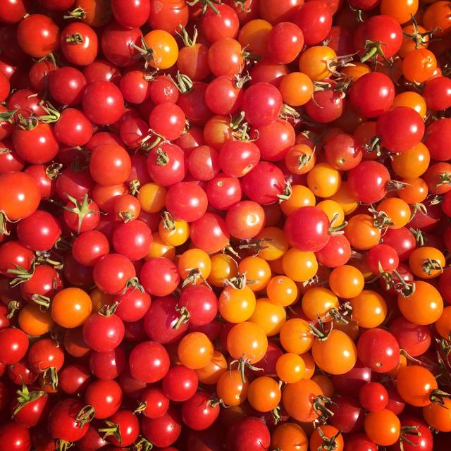 Cherry tomato heaven.