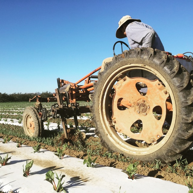 Beatin' the Weeds: Mechanically cultivating with our electric tractor.