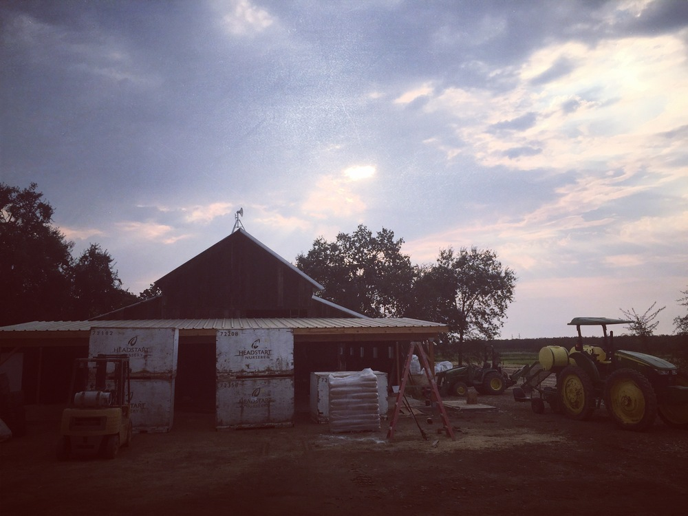Our new packing shed in the old barn is coming to completion.  See it yourself this Saturday!