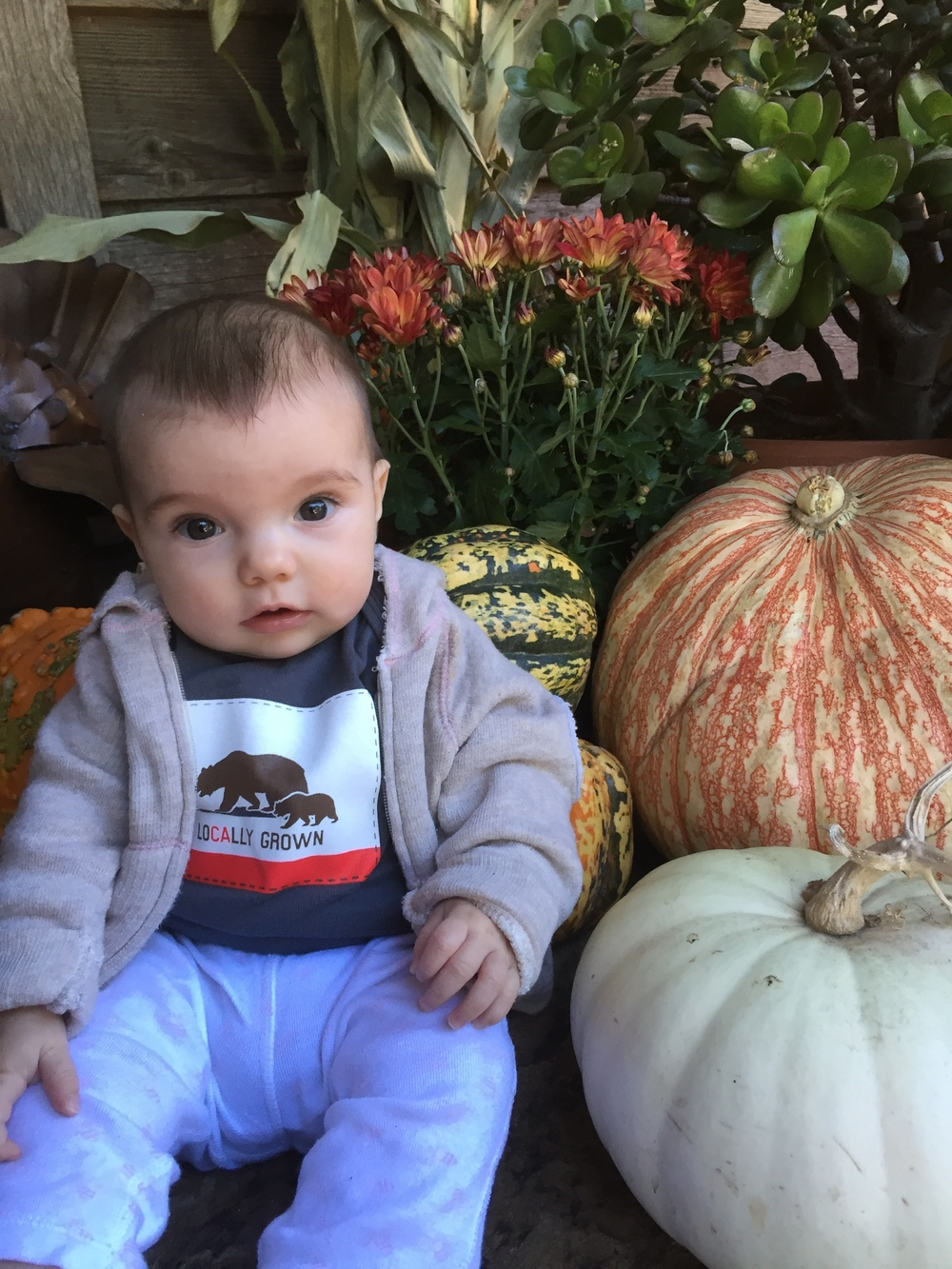 Our best crop of 2015!! Hazel, now 4 months old, among her winter squash.