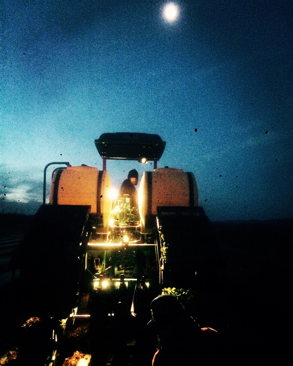 Transplanting before dawn to keep crops going into the field.