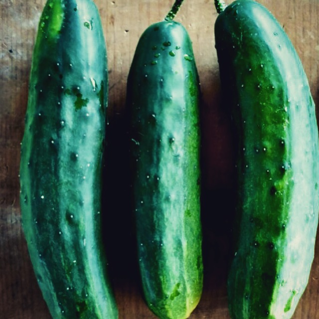 It's cucumber season! We keep a steady supply of these crisp, refreshing slicer cucumbers all summer.