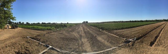 Field panorama on a warm mid day.