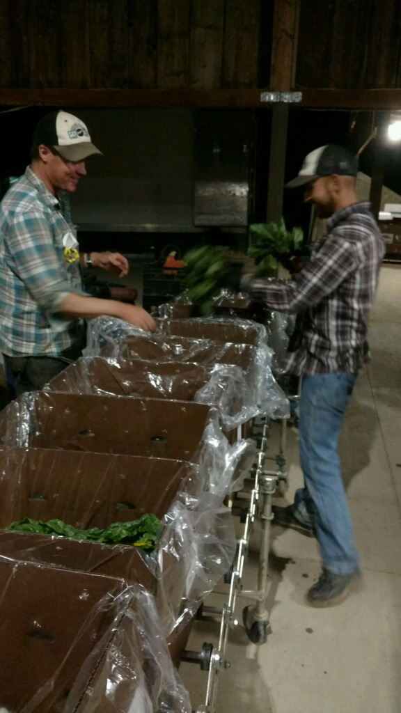 Dusty and Abe packing CSA shares.  The picture is a bit blurry because these guys are working late to pack your produce harvested Tuesday and delivered Wednesday, cause that's the small farm CSA difference.  We hope you enjoy!