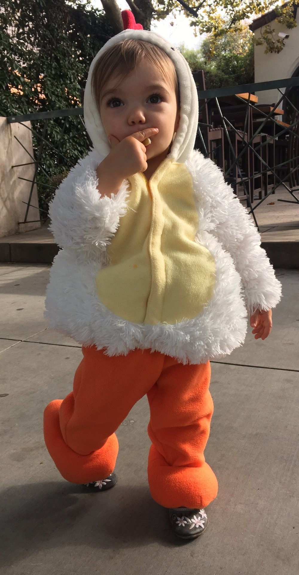 Little Hazel Hay following in her family footsteps: she was a pasture raised, certified organic, soy free chicken for Halloween.