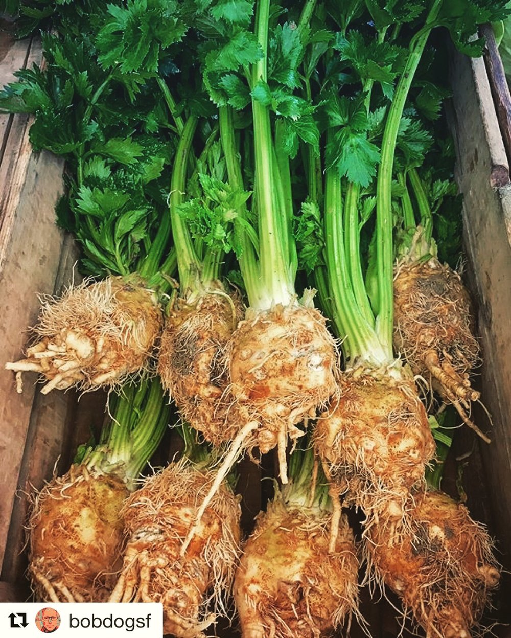 An under appreciated beauty - celeriac.