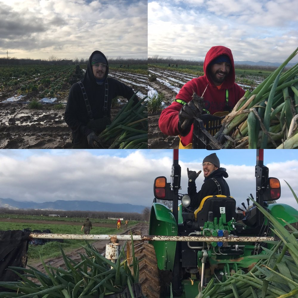 Marshall and Abe - starting their second year on the farm - doing a great job and keeping it real hauling onions out of the muck.  With these wet conditions, we have to keep the tractors out of the beds.