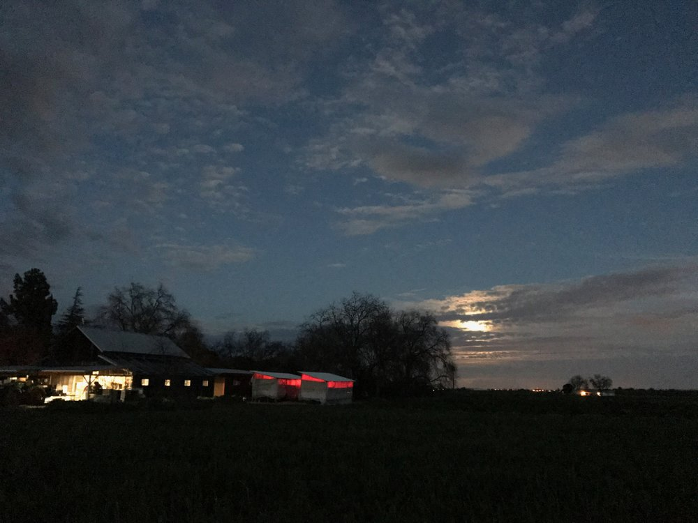 As the sun went down, the moon rose over our fields.  We're still packing away after dark in the packing shed.  And you can see the red glow of our chick brooders providing warmth and security to those growing girls.