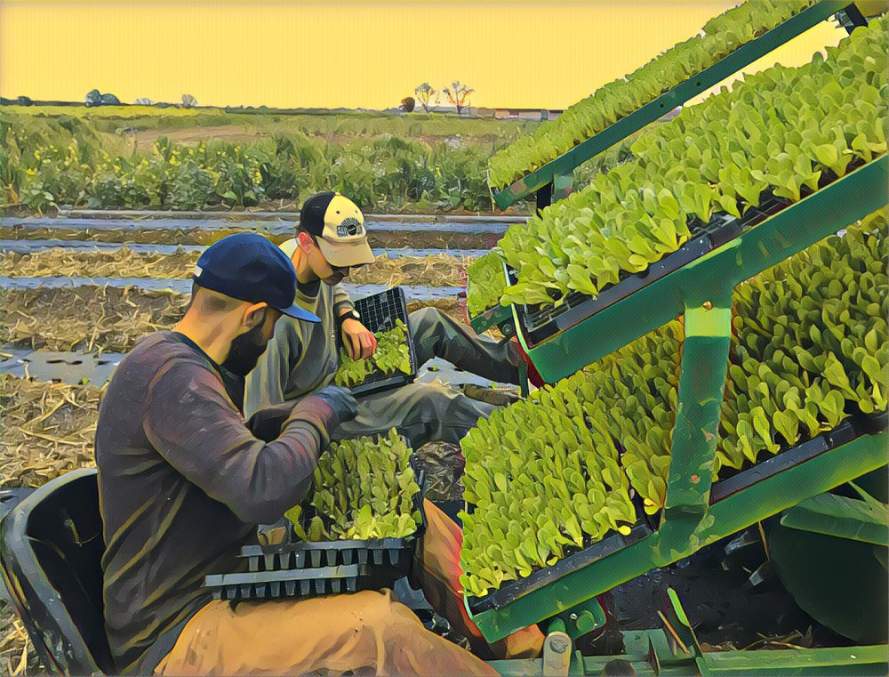 Abe and Marshall plugging lettuces on the water wheel transplanter before we were halted again by the rain.